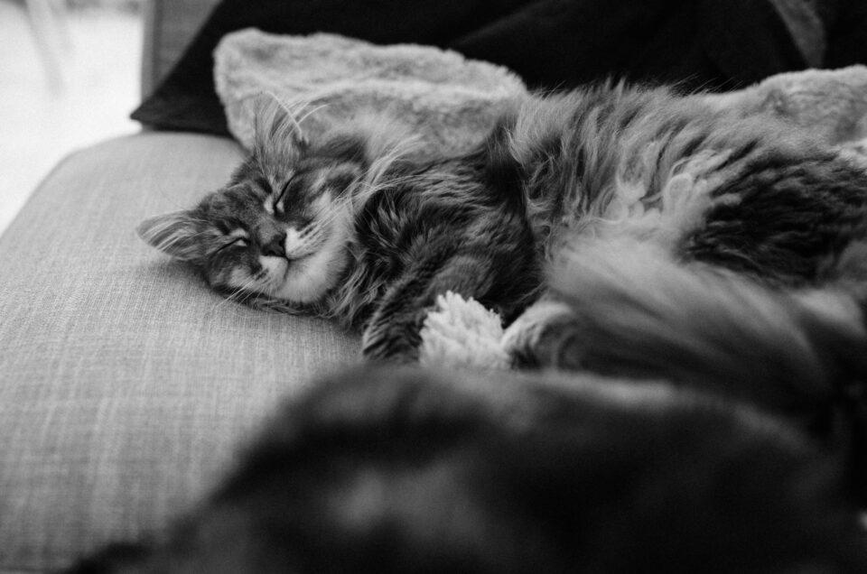 Cat naps: Part one thousand